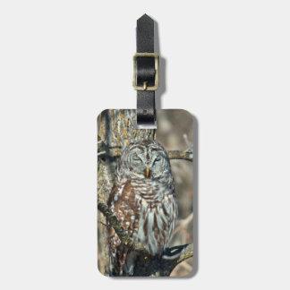 USA, Kansas. Barred Owl (Strix Varia) Luggage Tag
