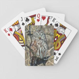 USA, Kansas. Barred Owl (Strix Varia) Playing Cards