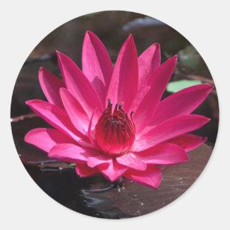 USA, Kansas, Bright Red Water Lilly Round Sticker