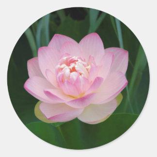 USA, Kansas, Pink Water Lilly Round Stickers