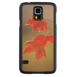 USA, Kansas, Red Leaves In Early Fall Carved Maple Galaxy S5 Slim Case