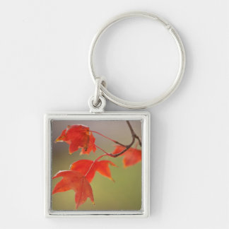 USA, Kansas, Red Leaves In Early Fall Keychain