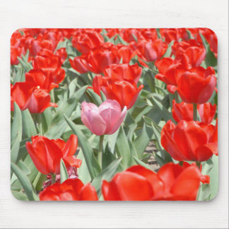 USA, Kansas, Red Tulips With One Pink Tulip Mouse Pad