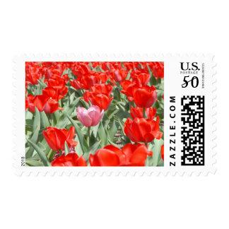 USA, Kansas, Red Tulips With One Pink Tulip Postage