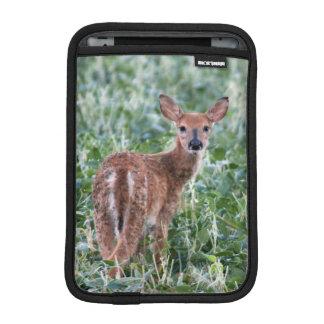 USA, Kansas, Small Whitetail Deer iPad Mini Sleeve