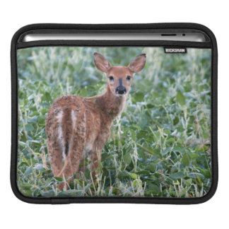 USA, Kansas, Small Whitetail Deer iPad Sleeve