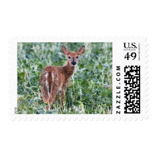 USA, Kansas, Small Whitetail Deer Postage Stamp