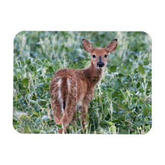 USA, Kansas, Small Whitetail Deer Rectangular Photo Magnet