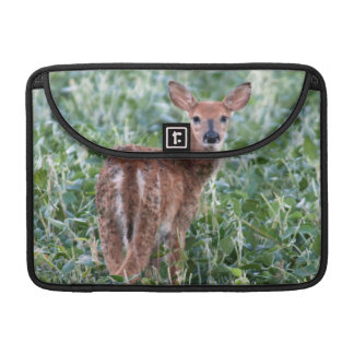USA, Kansas, Small Whitetail Deer Sleeve For MacBook Pro