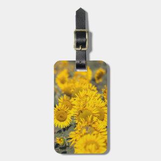 USA Kansas Sunflowers Helianthus Annuus Tags For Bags