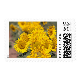 USA, Kansas. Sunflowers (Helianthus Annuus) Postage