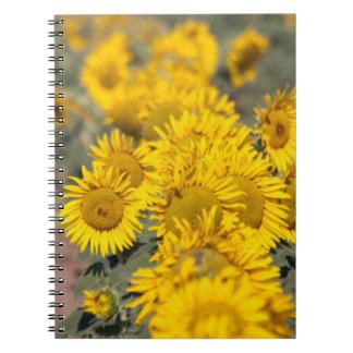 USA, Kansas. Sunflowers (Helianthus Annuus) Spiral Notebook