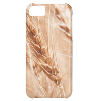 USA, Kansas, Wheat At Harvest Time Cover For iPhone 5C