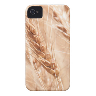 USA, Kansas, Wheat At Harvest Time iPhone 4 Cover
