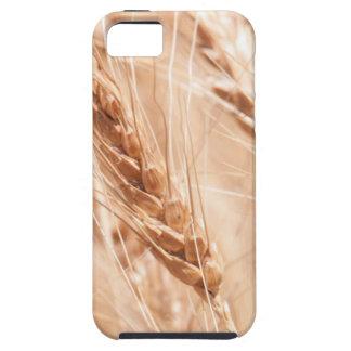 USA, Kansas, Wheat At Harvest Time iPhone SE/5/5s Case