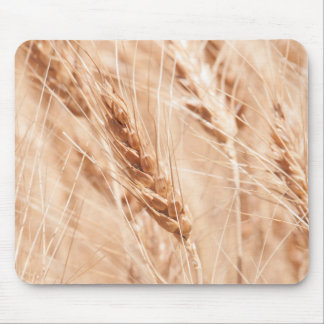 USA, Kansas, Wheat At Harvest Time Mouse Pad