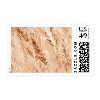 USA, Kansas, Wheat At Harvest Time Postage