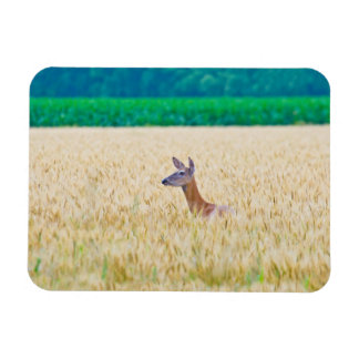 USA, Kansas, White Tail Doe Crossing Wheat Magnet