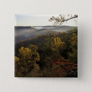 USA, Kentucky. Daniel Boone National Forest. Button