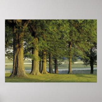 USA, Kentucky, Lexington. Row of trees and Print