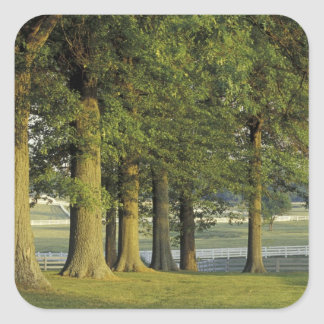 USA, Kentucky, Lexington. Row of trees and Square Sticker