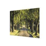 USA, Kentucky, Lexington. Tree-lined driveway, Canvas Print