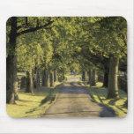 USA, Kentucky, Lexington. Tree-lined driveway, Mouse Pad