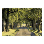 USA, Kentucky, Lexington. Tree-lined driveway, Photo Print