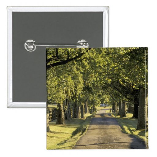 USA, Kentucky, Lexington. Tree-lined driveway, Pinback Button