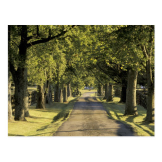 USA, Kentucky, Lexington. Tree-lined driveway, Postcard