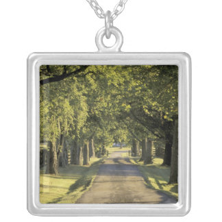 USA, Kentucky, Lexington. Tree-lined driveway, Silver Plated Necklace