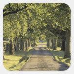 USA, Kentucky, Lexington. Tree-lined driveway, Square Sticker
