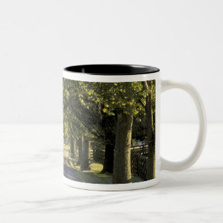 USA, Kentucky, Lexington. Tree-lined driveway, Two-Tone Coffee Mug