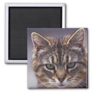 USA, Kentucky, Louisville, Close-up of cat Magnet