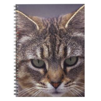 USA, Kentucky, Louisville, Close-up of cat Notebook