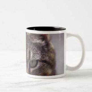 USA, Kentucky, Louisville, Close-up of cat Two-Tone Coffee Mug