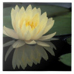 USA, Kentucky, Louisville Domestic water lily, Ceramic Tile