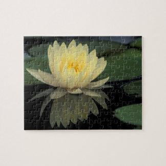 USA, Kentucky, Louisville Domestic water lily, Jigsaw Puzzle