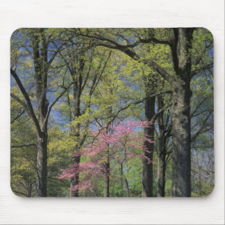 USA, Kentucky, Louisville. Eastern Redbud Mouse Pad