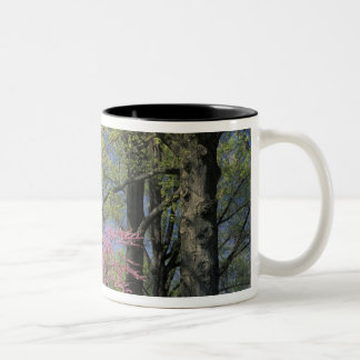 USA, Kentucky, Louisville. Eastern Redbud Two-Tone Coffee Mug