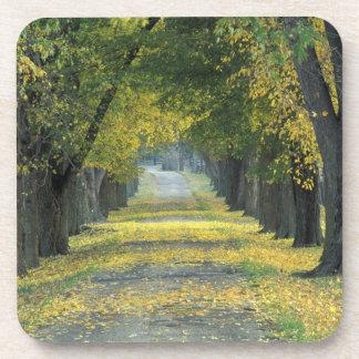 USA, Kentucky, Louisville. Tree-lined road in Coaster