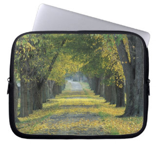 USA, Kentucky, Louisville. Tree-lined road in Computer Sleeves