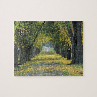 USA, Kentucky, Louisville. Tree-lined road in Jigsaw Puzzle