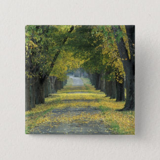 USA, Kentucky, Louisville. Tree-lined road in Pinback Button