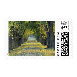 USA, Kentucky, Louisville. Tree-lined road in Postage