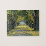USA, Kentucky, Louisville. Tree-lined road in Puzzle