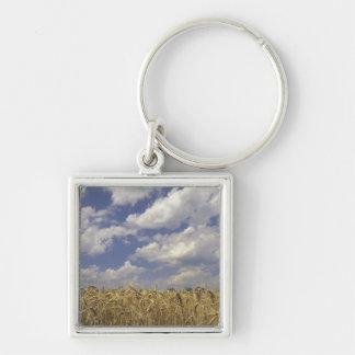 USA, Kentucky, Louisville. Wheat crop and Keychain