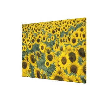 USA, Kentucky Pattern in field of cultivated Canvas Print