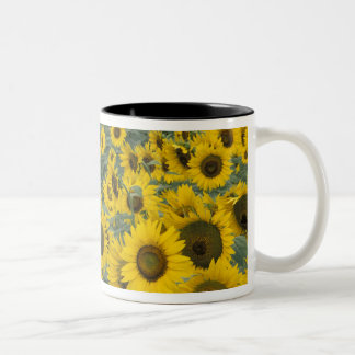 USA, Kentucky Pattern in field of cultivated Two-Tone Coffee Mug