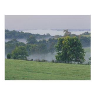USA, Kentucky. Rolling hills of the Bluegrass Postcard